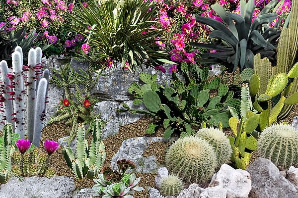 bricolaje y jardinera para crear un jardn de arbustos y cataceas