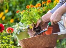 Bricolaje y jardinería: cómo hacer un jardín en casa