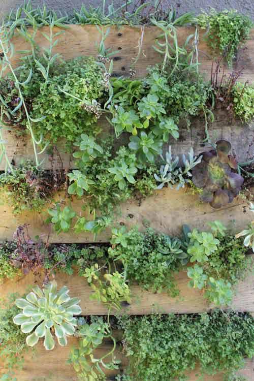 Bricolaje para jard n c mo hacer un jard n vertical casero for Jardin vertical casero palet