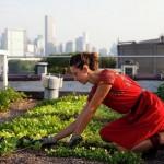 Agricultura urbana en México| Crea tu propia granja urbana