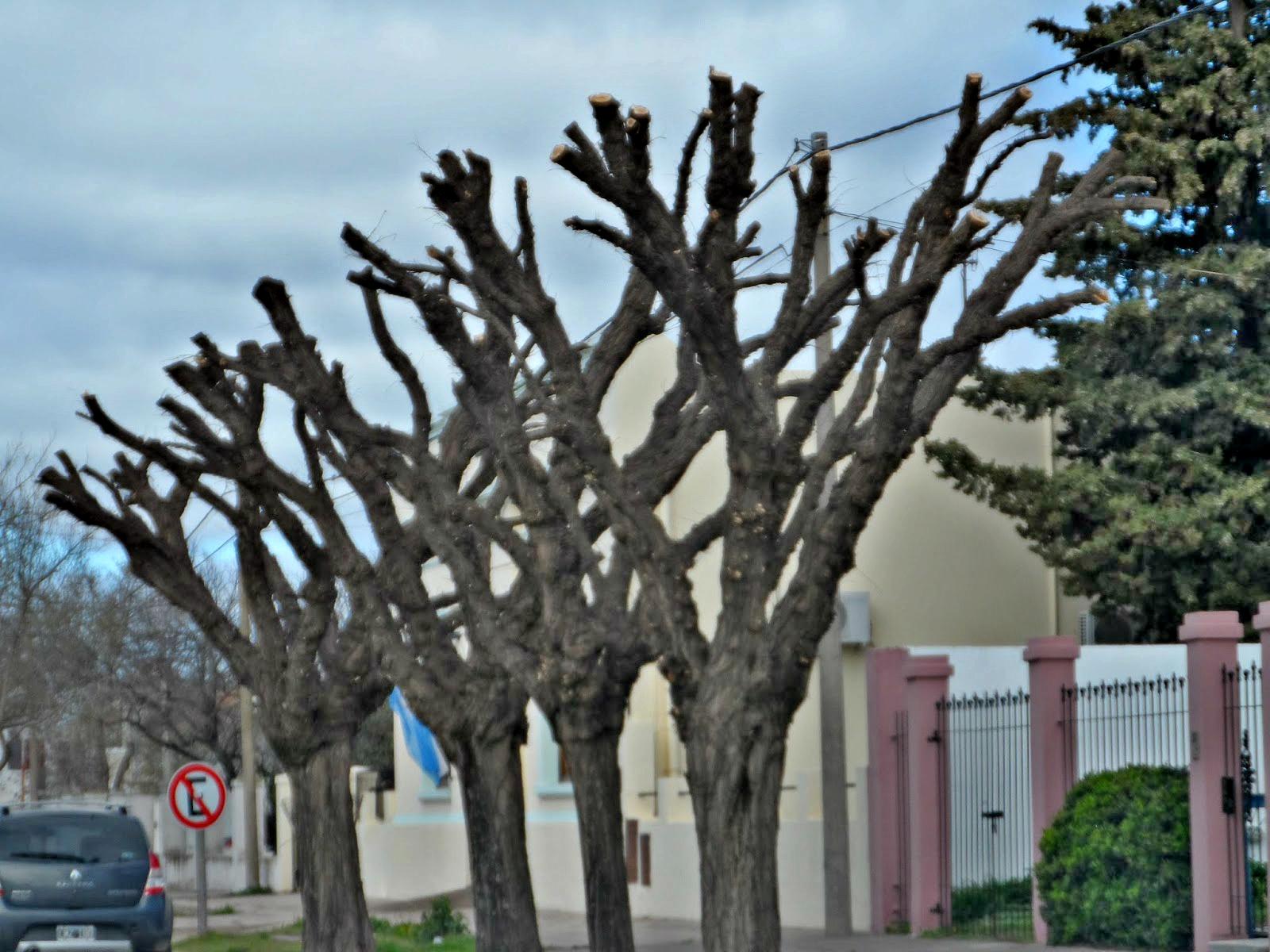 Poda de rboles urbanos una actividad insana para su salud y la tuya