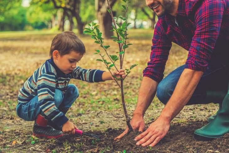 Cómo evitar el calentamiento global | 10 cosas concretas que puedes hacer: plantar un árbol