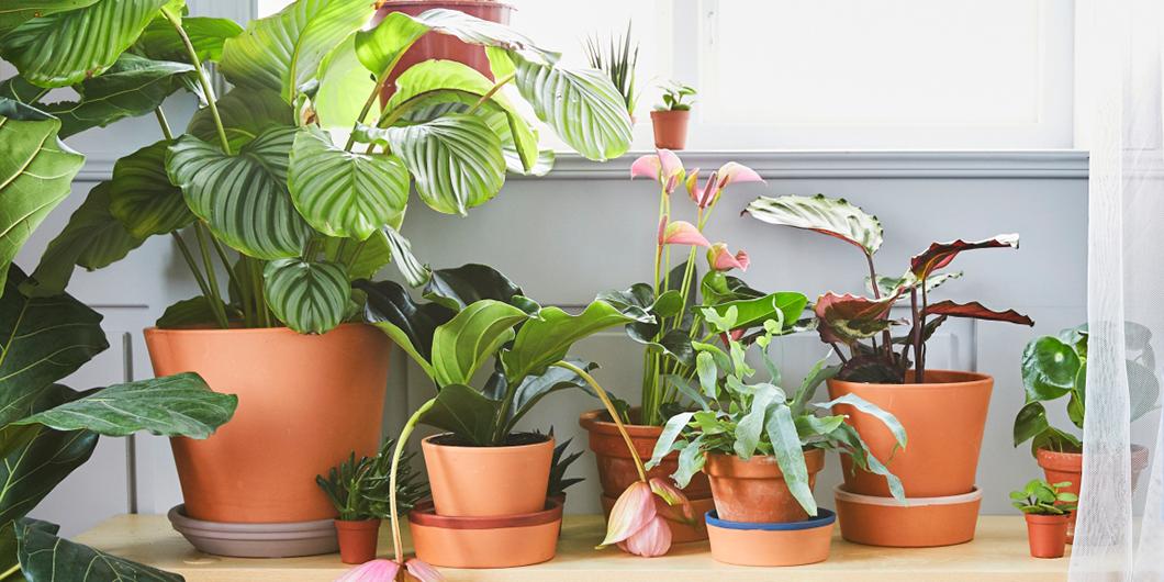 seo_plantas