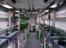 cultivar-sin-agua320180821125327