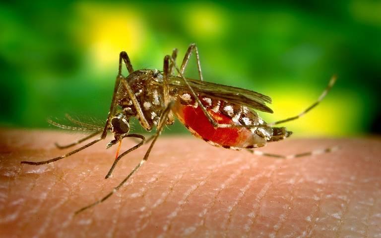 mosquito-dengue-salud