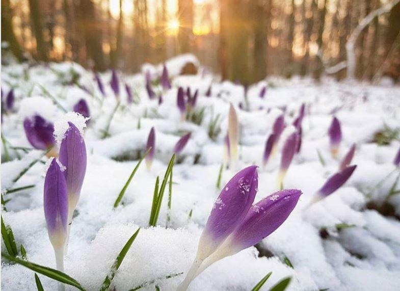 cuidado-de-las-plantas-en-invierno